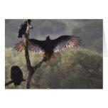 El gallinero cerca de permeable, Tejas de los halc Felicitaciones