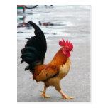 El gallo cruzó el camino postales