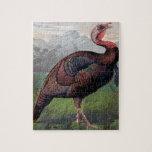 El gallo de Turquía salvaje del americano, ejemplo Puzzle Con Fotos
