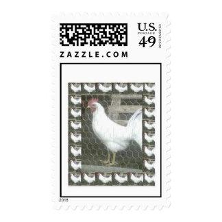 El gallo despierta llamada sello
