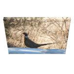 El gallo solitario impresión en lona estirada