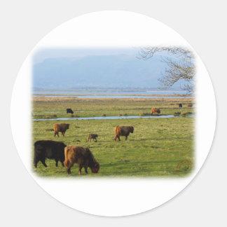 El ganado de la montaña acerca al lago Leven 9T076 Etiqueta