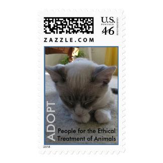 El ganador más lindo de la competencia del gato 20 sellos