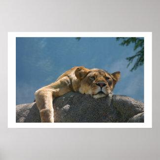 El gandulear de la leona poster