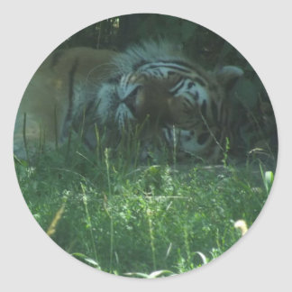 El gandulear en la sombra. Tigre Pegatina Redonda