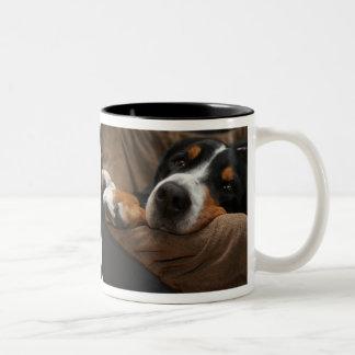 El gandulear suizo del perro de la montaña taza de dos tonos