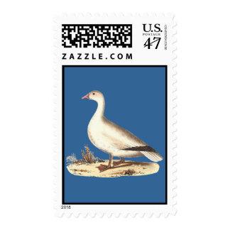 El ganso de nieve (hyperboreus del Anser) Estampilla