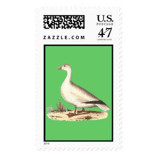 El ganso de nieve (hyperboreus del Anser) Estampillas