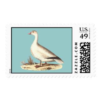 El ganso de nieve (hyperboreus del Anser) Sello Postal