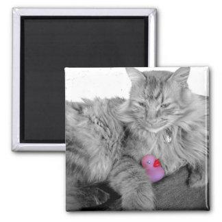 """El """"gatito abraza"""" el imán de goma del pato"""