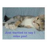¡el gatito, acaba de querer decir que le falto! postal