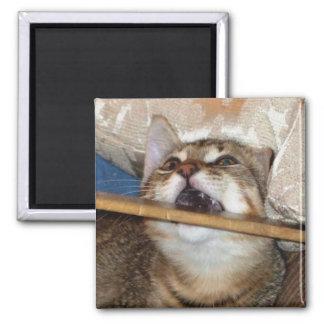 El gatito Chomp el imán