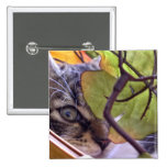 El gatito del gato del gatito de la mirada furtiva pins