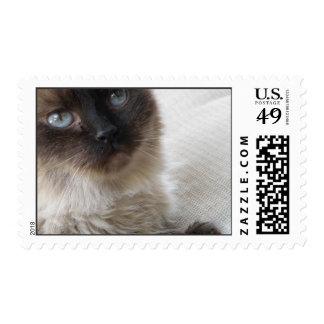 El gatito del ojo azul estampilla