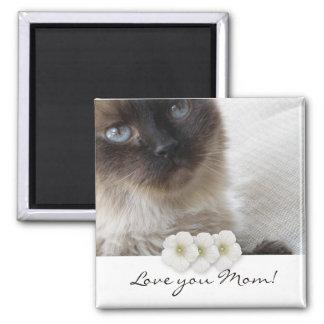 ¡El gatito del ojo azul, le ama mamá! Imán Cuadrado