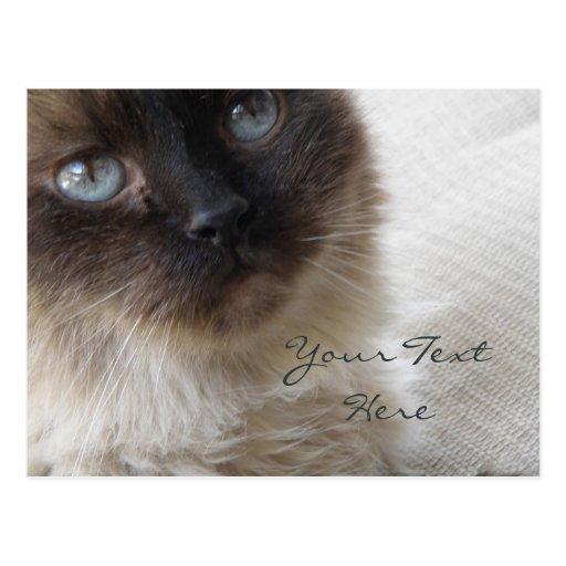 El gatito del ojo azul que falta su postal