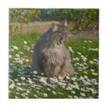 El gatito del rugido azulejo ceramica