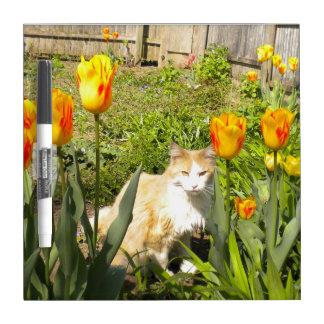 El gatito en los tulipanes seca al tablero del pizarras blancas