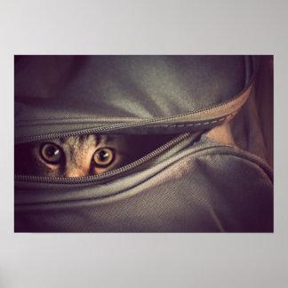 El gatito joven del Tabby que mira hacia fuera de Póster
