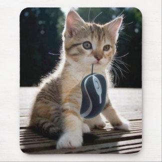 El gatito lindo pide prestado su ratón tapetes de raton
