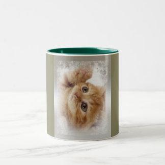 El gatito magnífico del jengibre quiere jugar taza de dos tonos