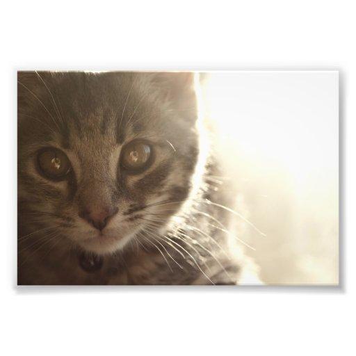 El gatito más dulce del color impresiones fotográficas