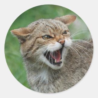 El gatito no es pegatinas divertidos
