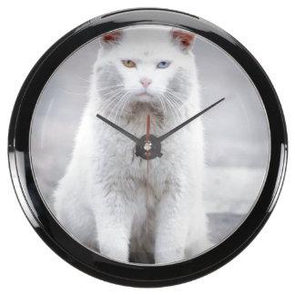 El gatito no se divierte reloj acuario