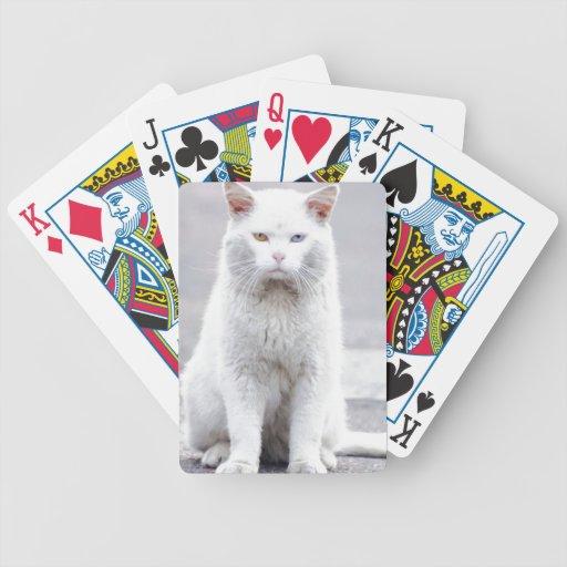 El gatito no se divierte barajas de cartas