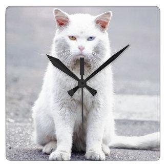 El gatito no se divierte relojes