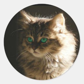El gatito observa los sellos del sobre pegatina redonda