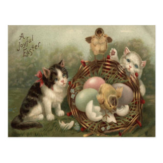 El gatito Pascua del gato coloreó el polluelo Postal