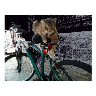 El gatito precioso espera al dueño para ir a Bikin Tarjetas Postales