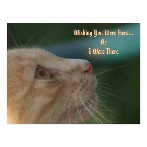 El gatito que le deseaba estaba aquí postal