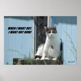 El gatito rompe la puerta de malla póster
