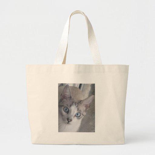 El gatito tiene ojos azules bolsas
