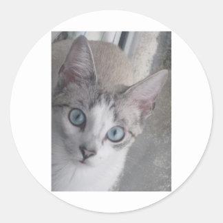 El gatito tiene ojos azules pegatina redonda