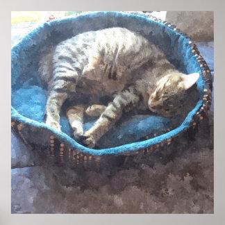 El gatito toma una siesta, el dormir del gato de póster