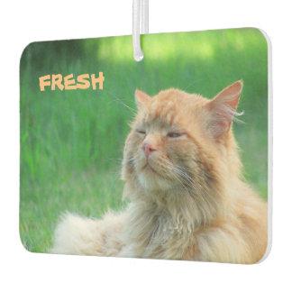 "El gato anaranjado grande dice ""fresco """