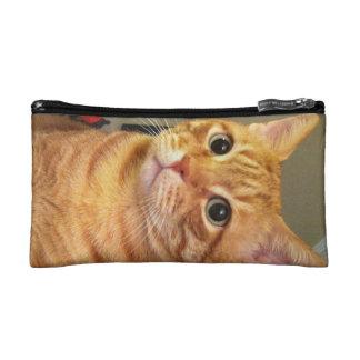 El gato anaranjado lleva - todo el bolso