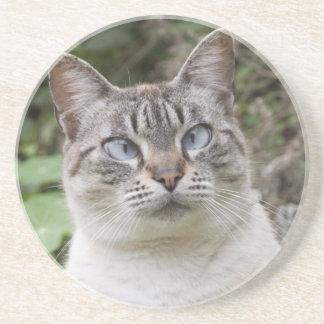 El gato bizco posavasos manualidades
