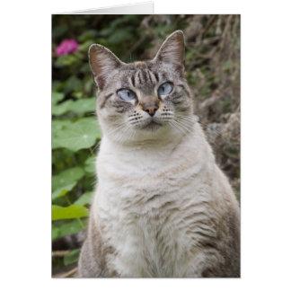 El gato bizco tarjeta pequeña