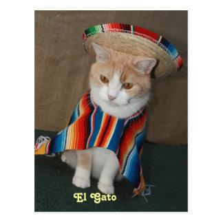 El Gato Bubba Post Card