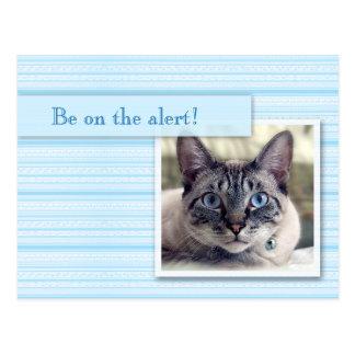 El gato con los ojos abiertos dice ahorrar la postal