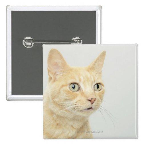 El gato con los ojos se abre de par en par pins