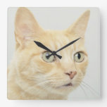 El gato con los ojos se abre de par en par relojes