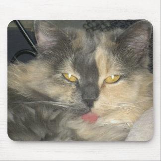 El gato consiguió su lengua alfombrilla de ratón