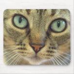¿El gato consiguió su ratón? Tapete De Ratones