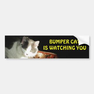 El gato de parachoques está mirando 2 pegatina para auto