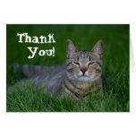 El gato de Tabby sonriente le agradece Felicitacion